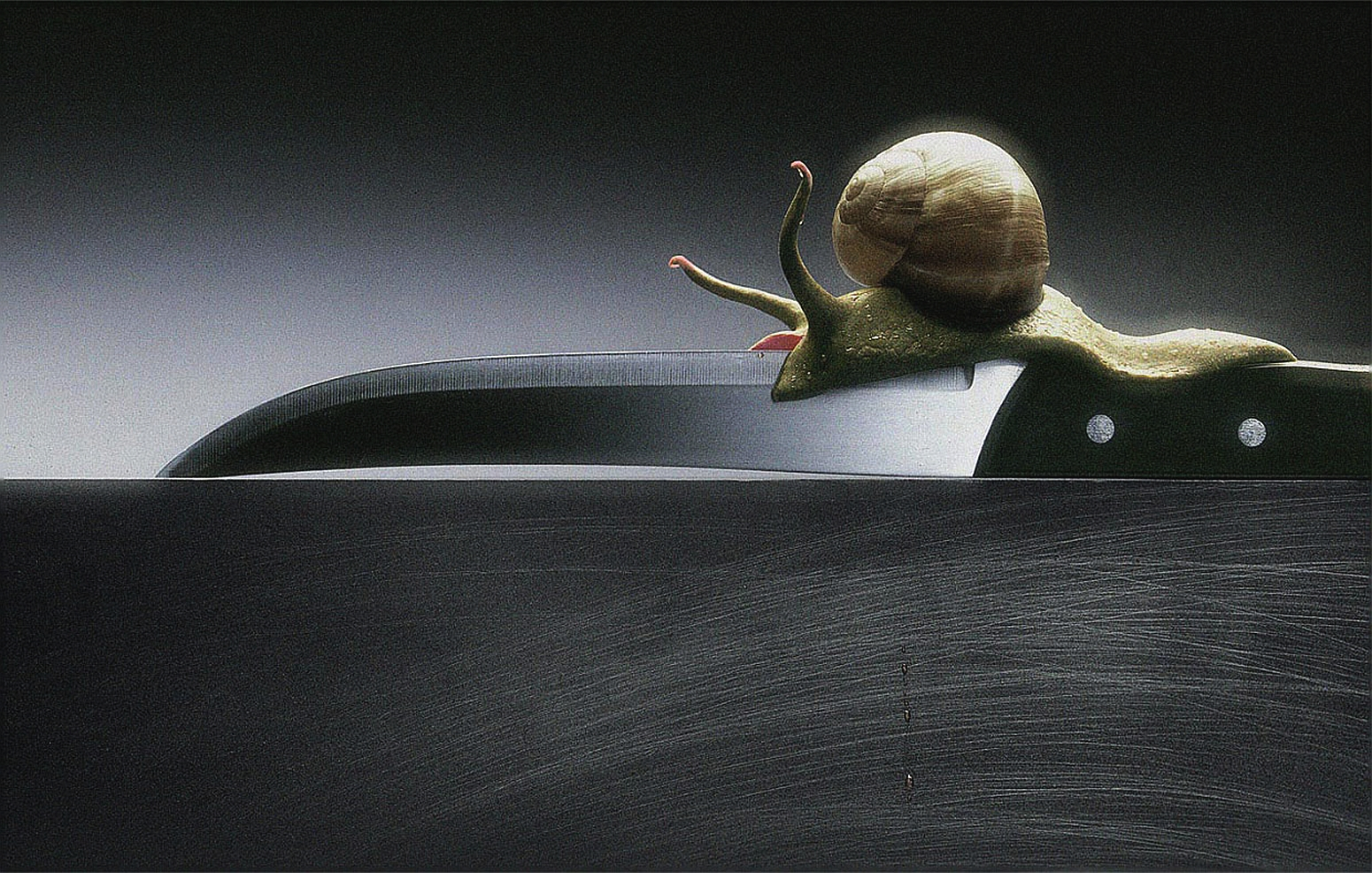 snail on the blade