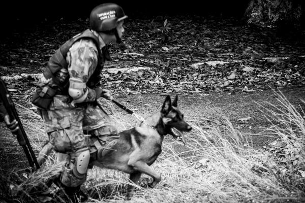 FAB PÉ DE POEIRA:  Batalhão de Infantaria de Aeronáutica Especial de Recife capacita 30 novos militares em operações com cães de guerra.