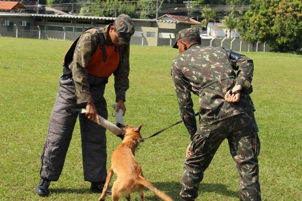 FAB PÉ DE POEIRA: Grupo de Segurança e Defesa da Ala 8 (GSD-MN) forma condutores de cães de guerra no Amazonas
