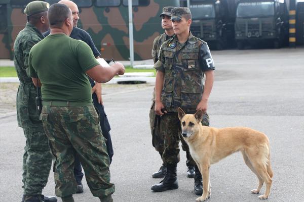 Cães do 13° Grupamento de Segurança e Defesa se destacam em competição do Exército